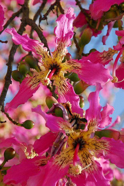 Flower 30 Beautiful Flowers Flowering Trees Tropical Tree