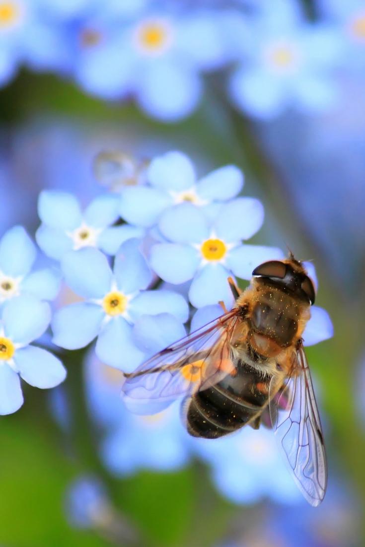 16 Insectes Et Animaux Utiles A Son Jardin Animaux Jardins Dessins Faciles