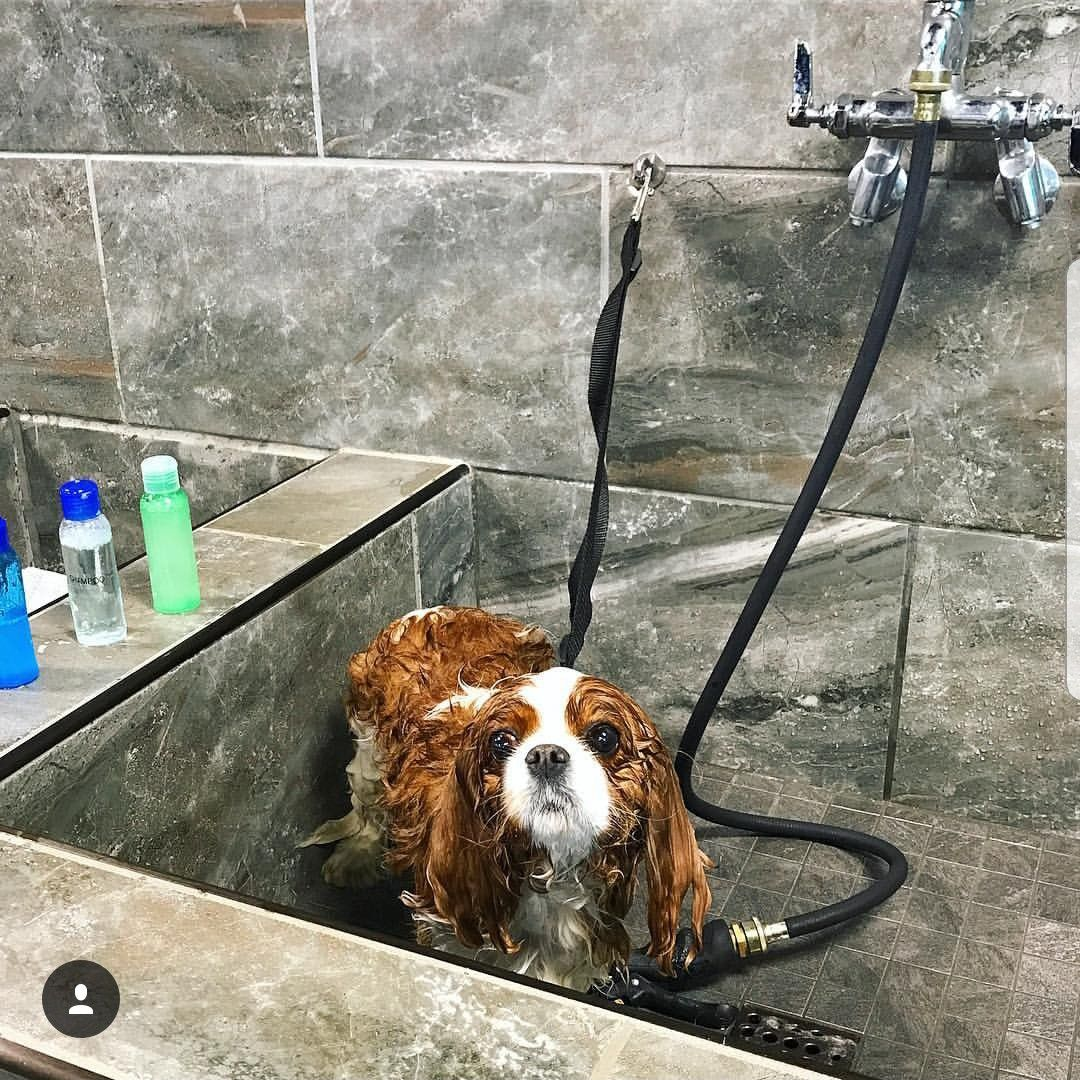 Customers And Their Pets Are Loving Our Self Serve Dog Wash
