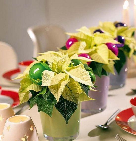 Winter blühende Pflanzen als herrliche Weihnachtsdekoration