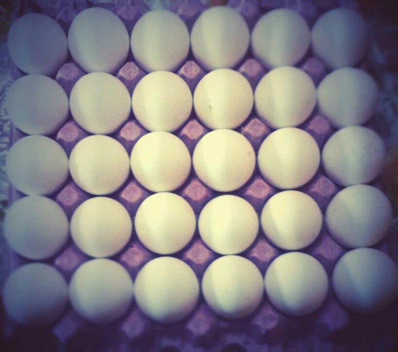 Ponga huevos carajo