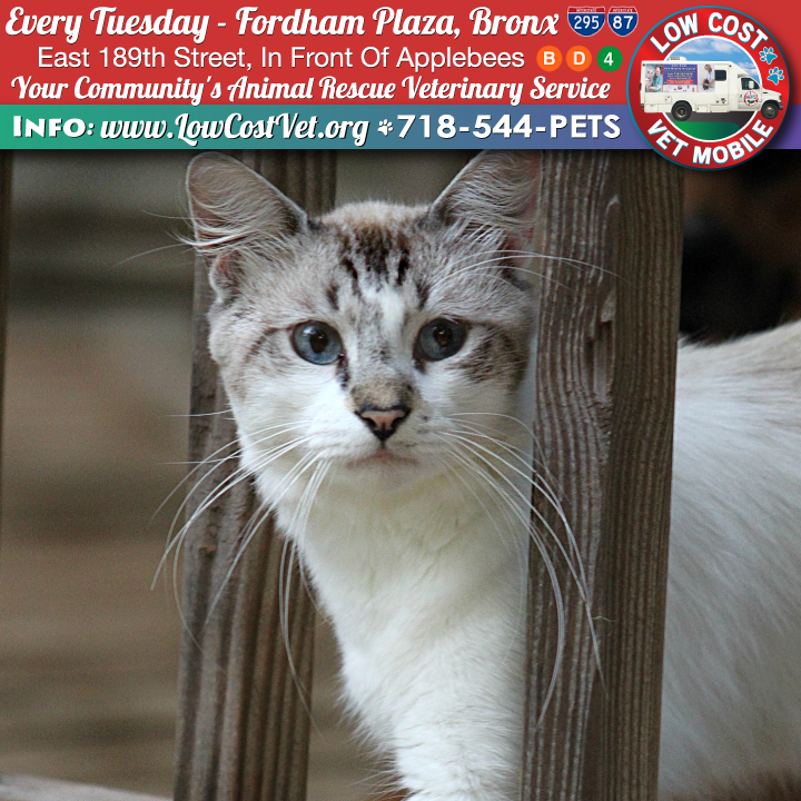 Every Tuesday The Low Cost Vet Mobile Is In The Bronx At Fordham Plaza E189 St 3rd Ave In Front Of Apple Mobile Vet Veterinary Services Animal Rescue