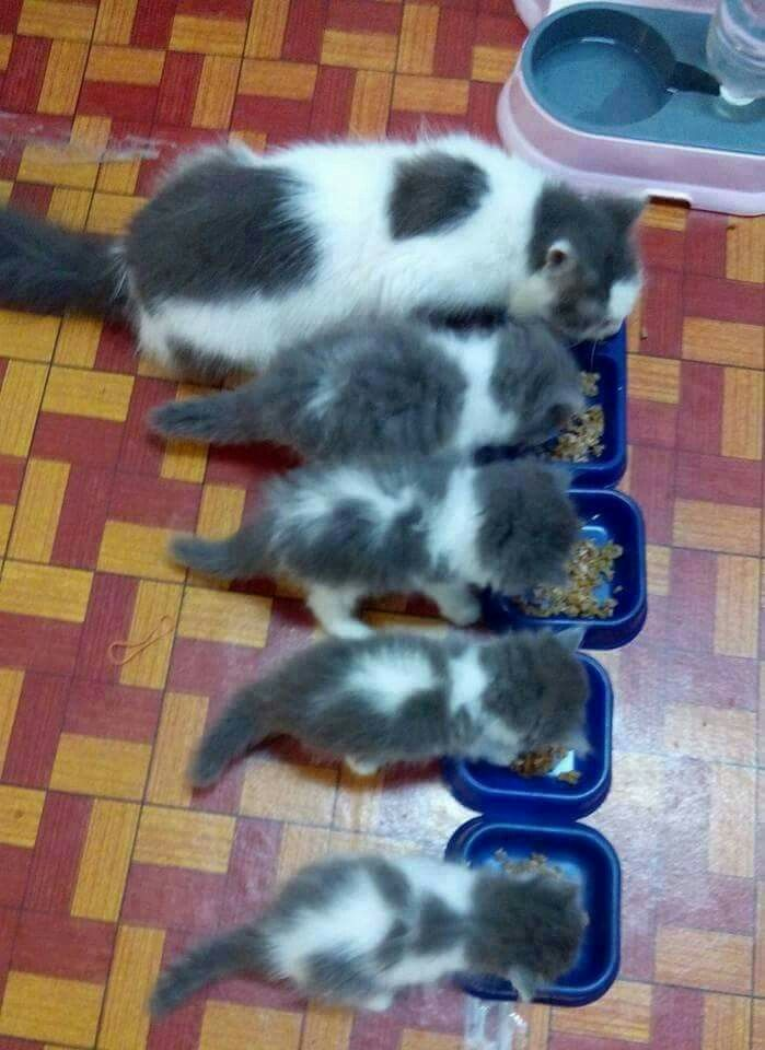 Too cute! Meowie... Cats and kittens, Kittens, Cute cats