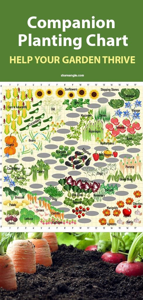 Photo of Tomatoes Hate Cucumbers: Secrets Of Companion Planting And Popular Planting Combinations