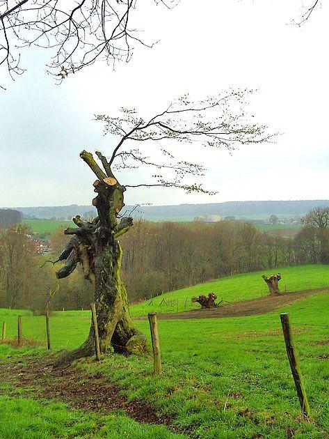 Limburgs Landschap  (Van vroegevogels)