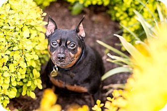 Plainfield Ct Maltese Poodle Miniature Mix Meet Olaf A Dog