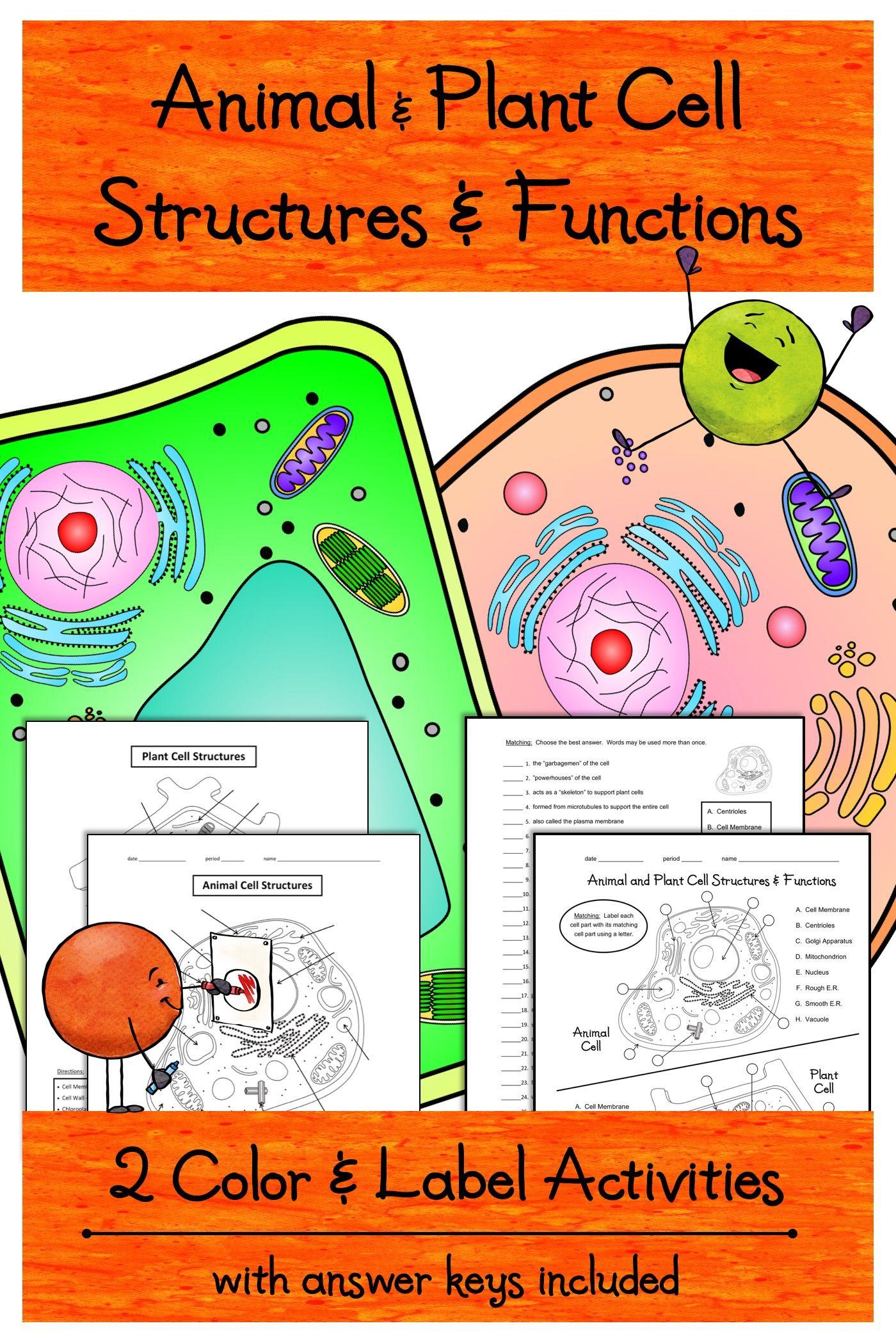hight resolution of 2 Animal \u0026 Plant Cells Color \u0026 Label Activities Worksheets   Free science  worksheets