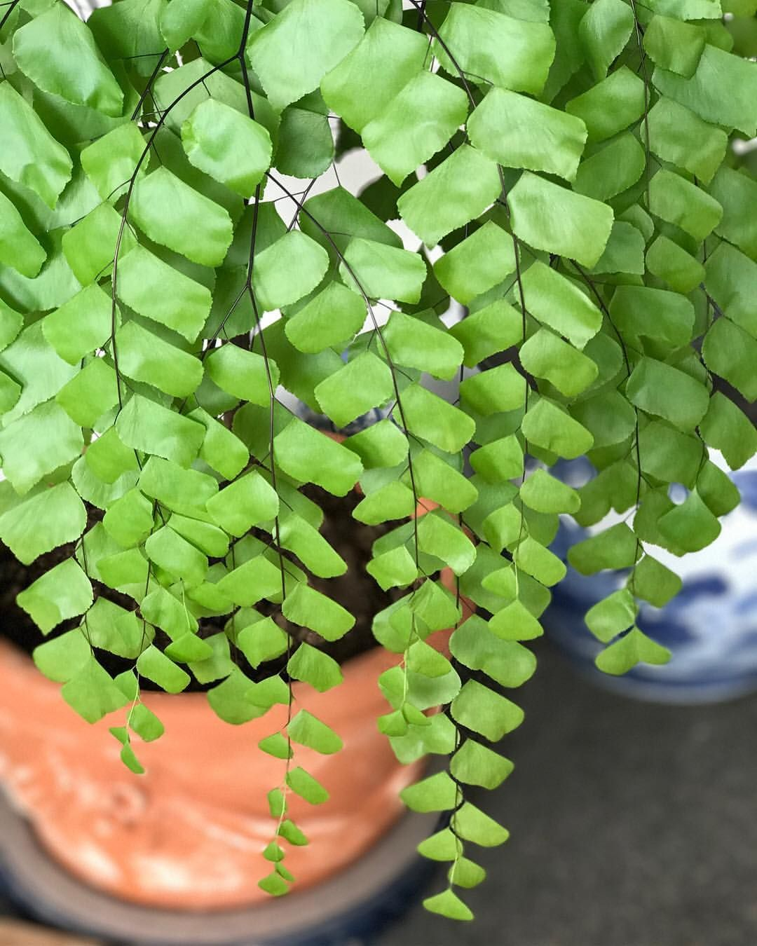 Nursery Indoor Plants Near Me: Pin By Me Eyes On PHOTOSYNTHESISING