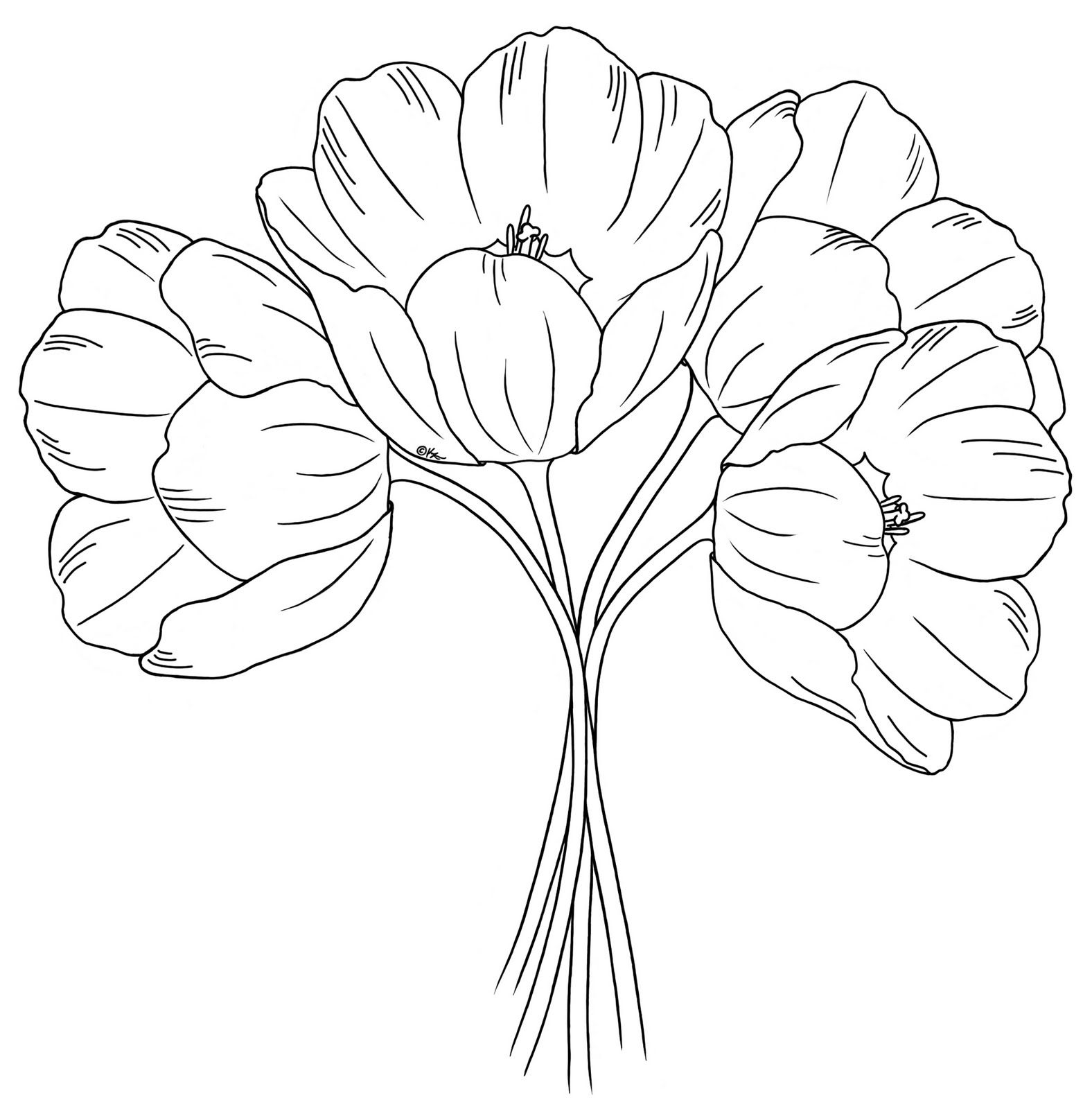 Line Drawing Of Tulip Flower : Open tulips drawing pixshark images galleries