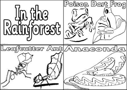 91 Coloring Pages Animals Rainforest Amazon Coloring Pages Ks2