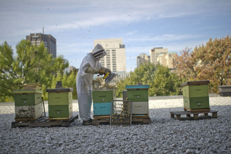 It's 'Bee Week' on the Pure Green blog! These bees are at the opera! Read more: http://bit.ly/Ava1eI