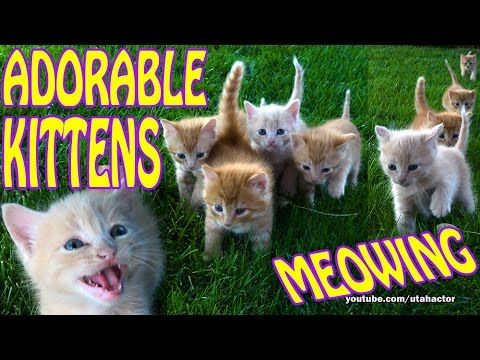 Four Week Old Kittens Meowing and Running on Grass CUTE