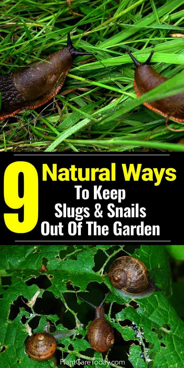 Gardening tips bug prey gardening tips for drought round