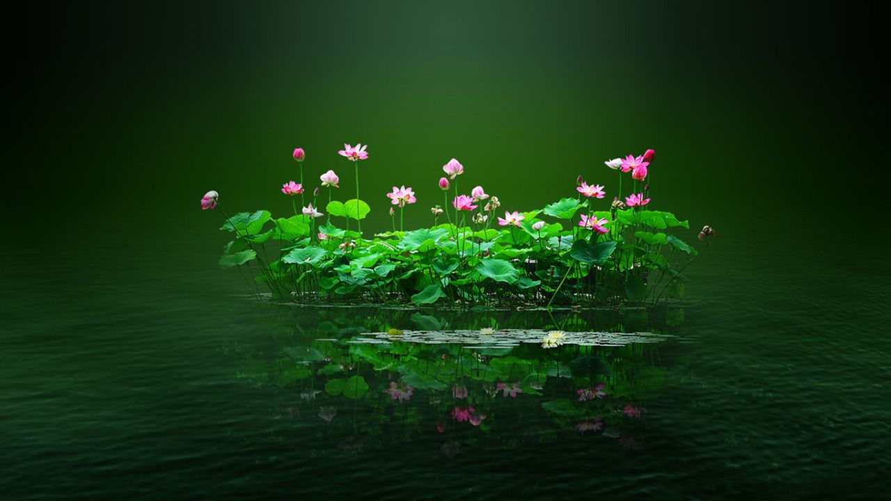 Renamonkalou Lotus Pond Highlandvalley Tumblr Pinterest