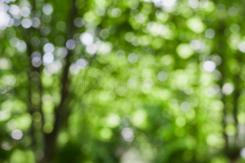 Beautiful Blurred Summer Trees In Park Natural Green Bokeh Background Beautifu Ad Summer Trees Beautiful Blurr Bokeh Background Summer Trees Bokeh