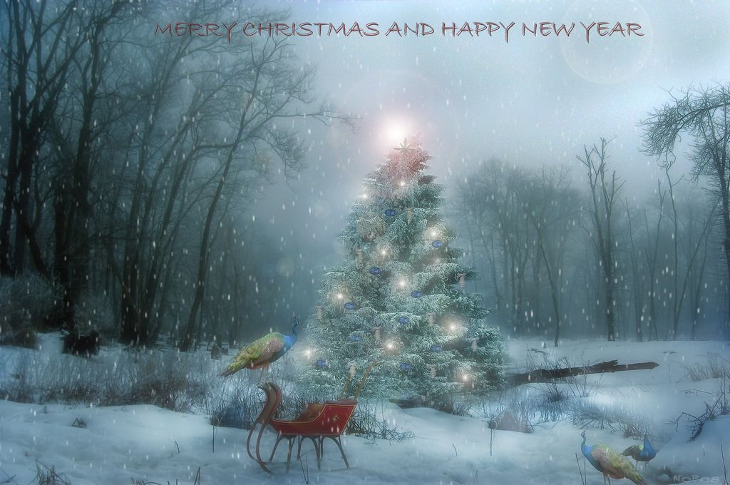 Merry Christmas and Happy New Year   Flickr - Photo Sharing!
