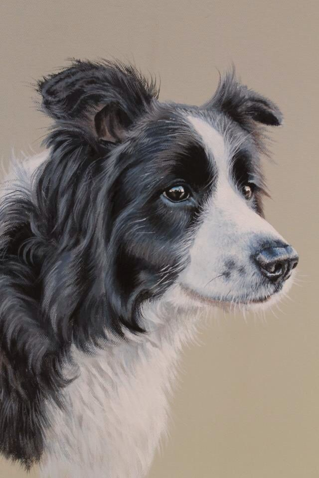 Border Collie Painting Border Collie Art Dog Paintings Dog Drawing
