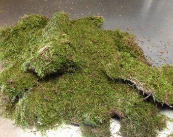 Sheet Moss Fresh Vase Filler Fl Supply Bag Of