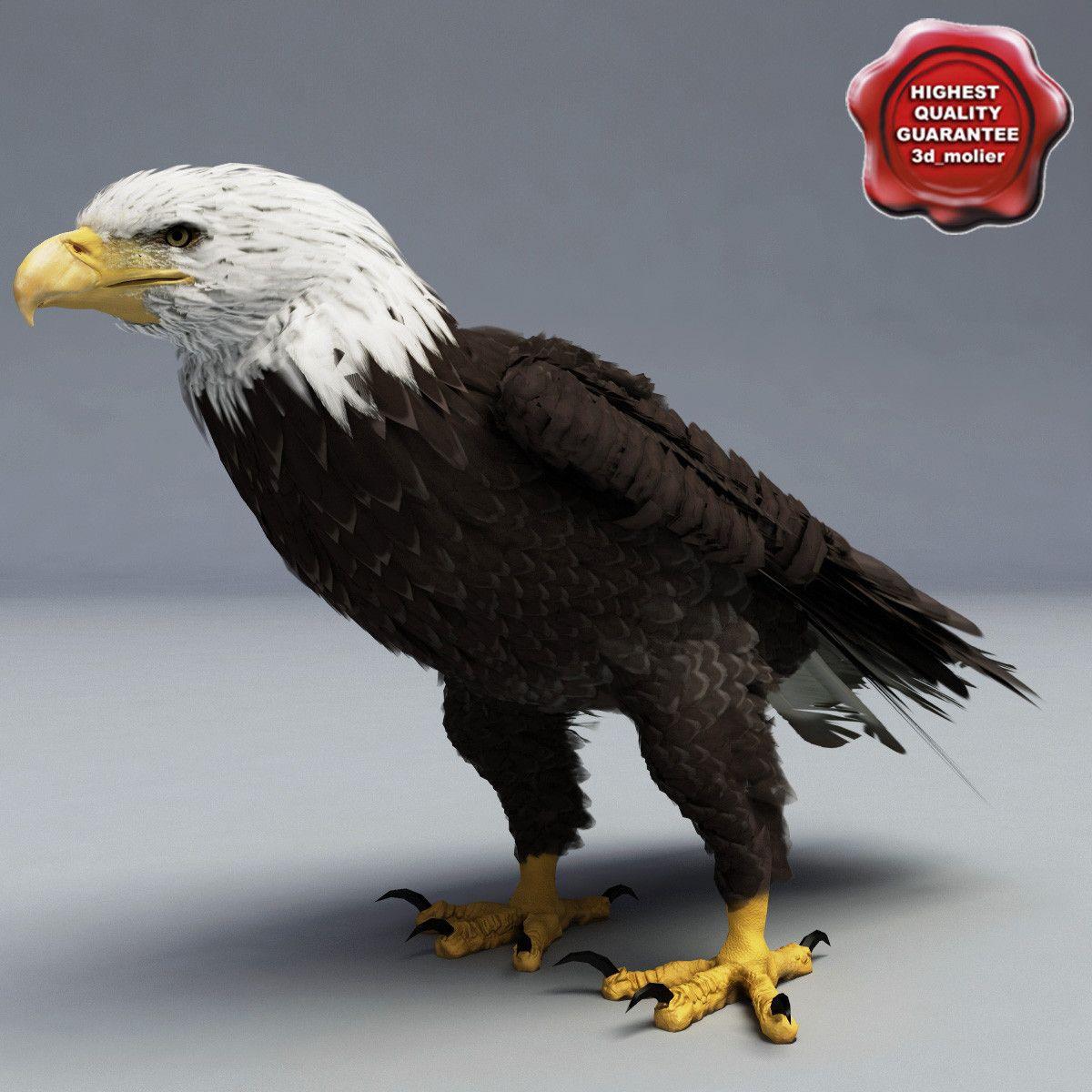 3d bald eagle pose 6 model | Неделя 12- птицы | pinterest | eagle
