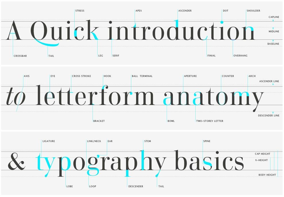 Letterform anatomy and typography basics | Typography | Pinterest ...