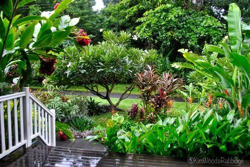 Tabu Tropical Paradise In Cairns Queensland Tropical Garden Design Tropical Landscaping Tropical Garden