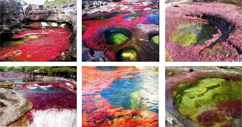Cano Cristales El Rio De Los 7 Colores Meta Colombia Artwork