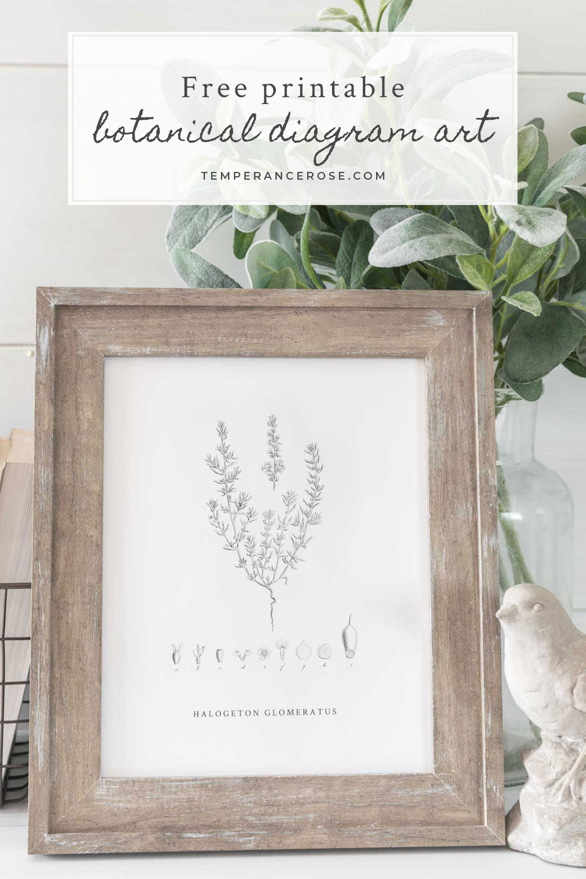 free printable 8 x 10 vintage botanical art featuring a line art diagram of a flower this free printable wall art is a cute budget friendly way to  [ 1200 x 1800 Pixel ]