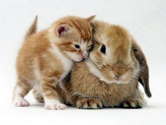 Alisa On Twitter Binatang Lucu Anak Kucing Gemas Bayi Hewan