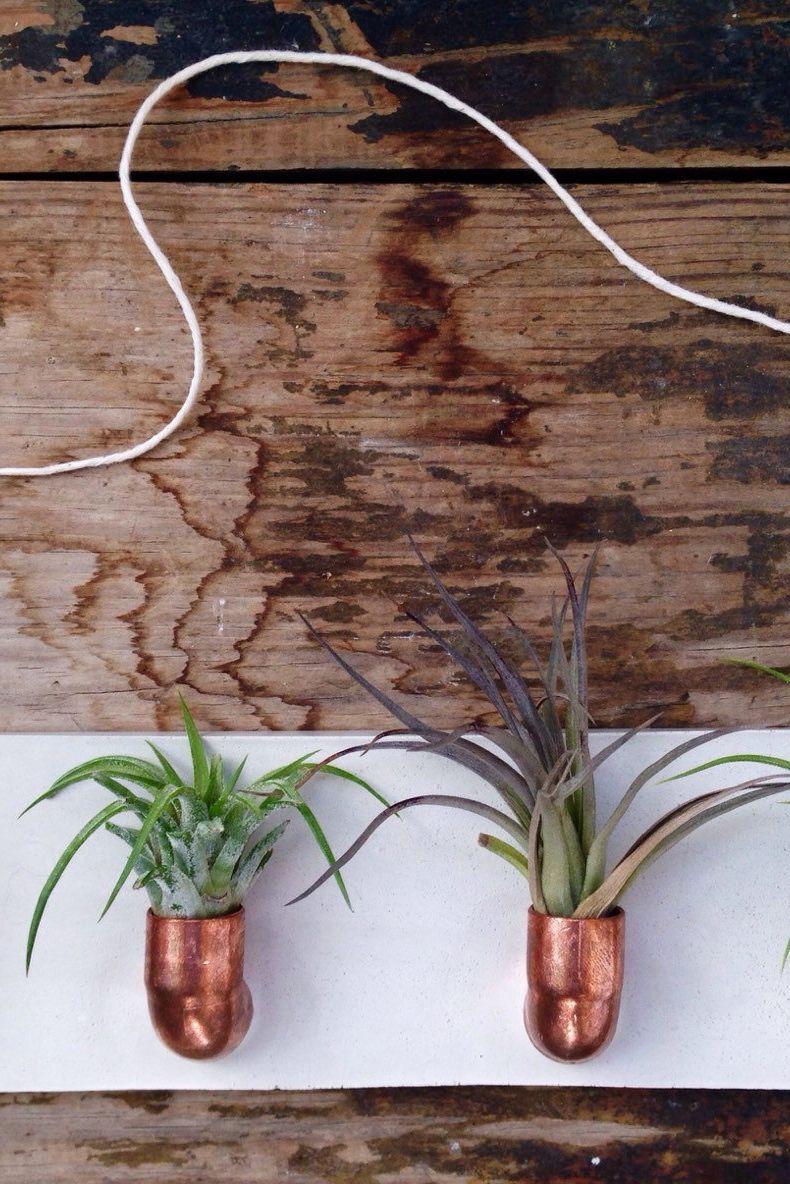 Copper And Air Plants Make A Splendid Pair