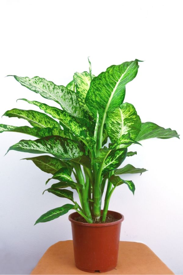Brave {Low Light} Houseplants That Aren't Afraid Of The Dark -   10 plants Indoor leaves ideas