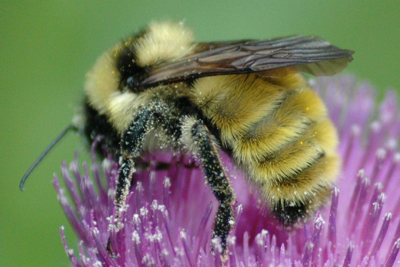 I saved a bumble bee\'s life today. I feel accomplished. ^_^ 5-3-11 ...