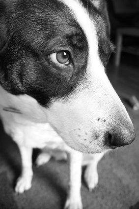 Service Dog Training Certification
