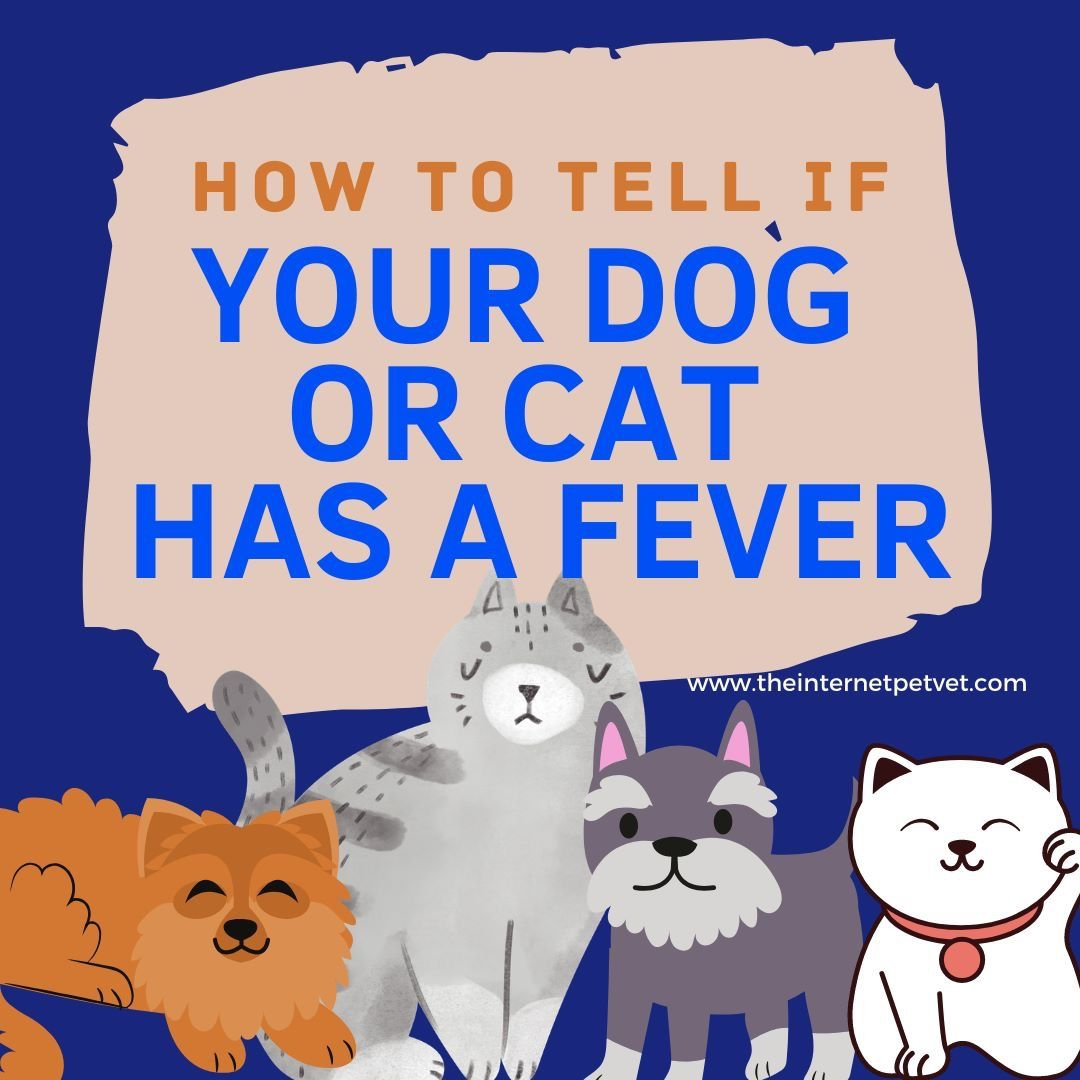 How To Tell If Your Dog Or Cat Has A Fever In 2020 Black Dogs Breeds Luxury Dog Collars Miniature Dog Breeds