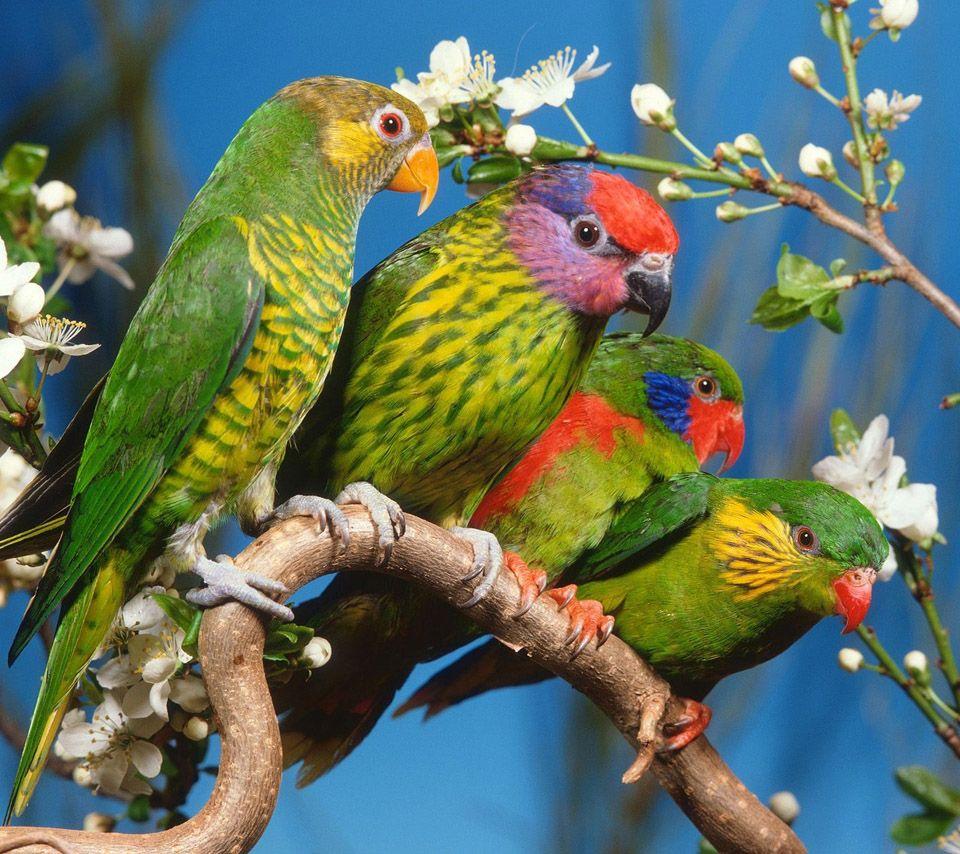 Beautiful Flowers Parrots Birds 2 960x854