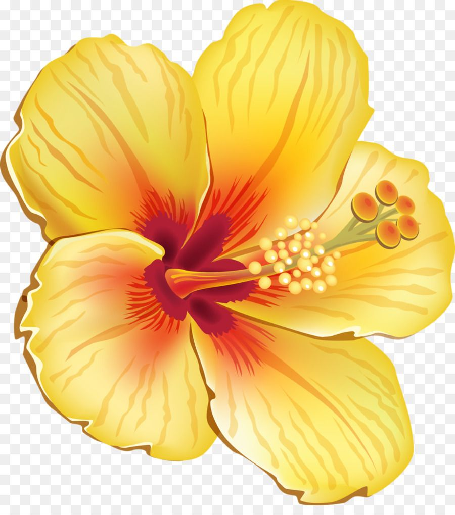 Hawaiian Hibiscus Shoeblackplant Flower Clip Art Tropical Flower Flower Clipart Cartoon Flowers Hawaiian Flowers