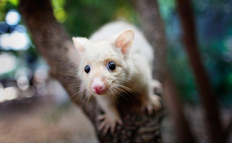 24 hours in pictures rare animals animals baby opossum