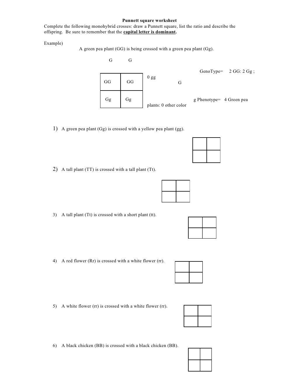 Punnett Square Practice Problems Worksheet Punnett Square
