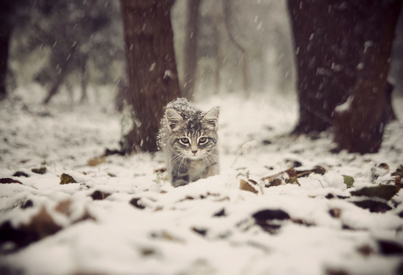 snowstormkitty