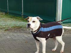 Hund Hat Mantel Endlich Háčkování Pletení šití Pinterest