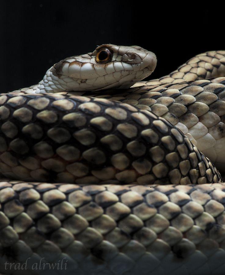 Картинки змей китай