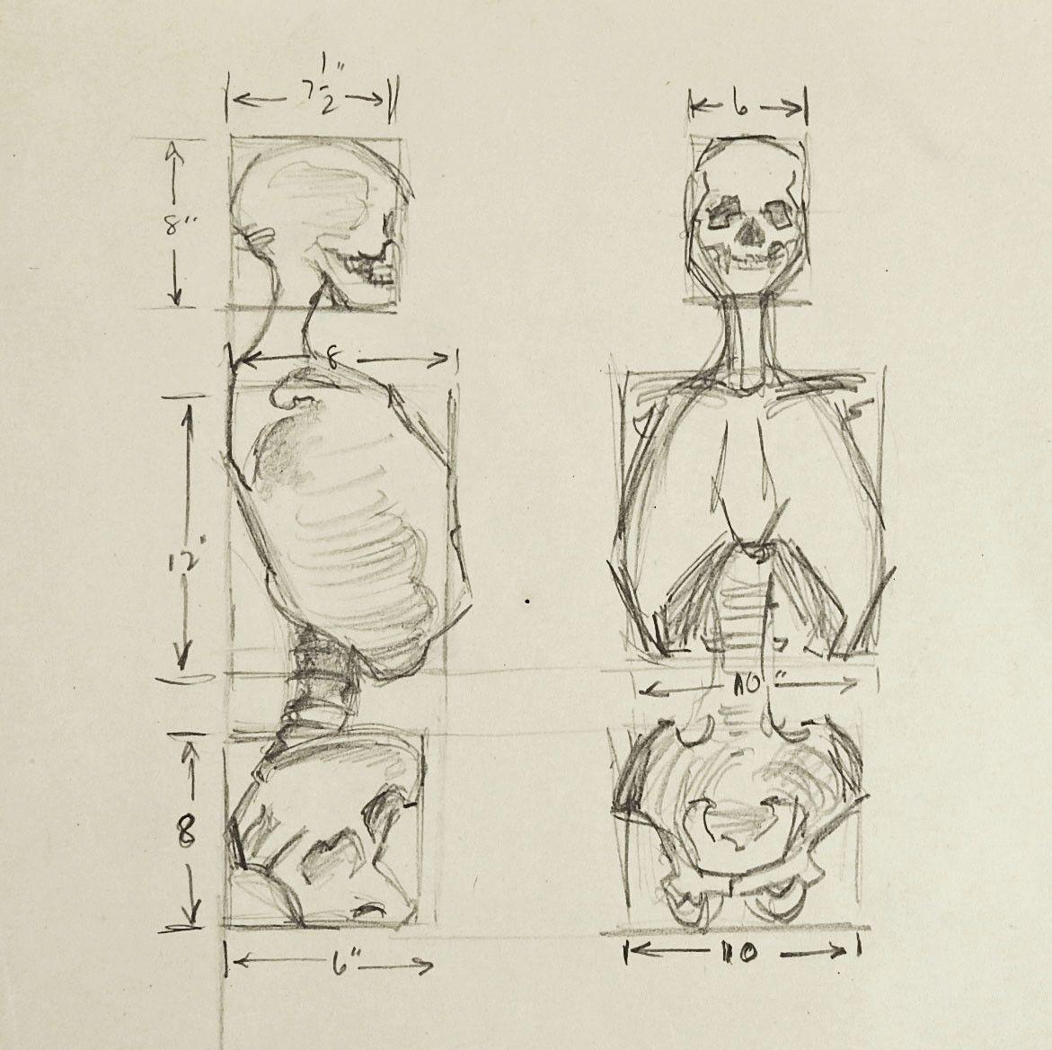 Anatomy Skeleton Study Drawing | Anatomía, Dibujo y Dibujar