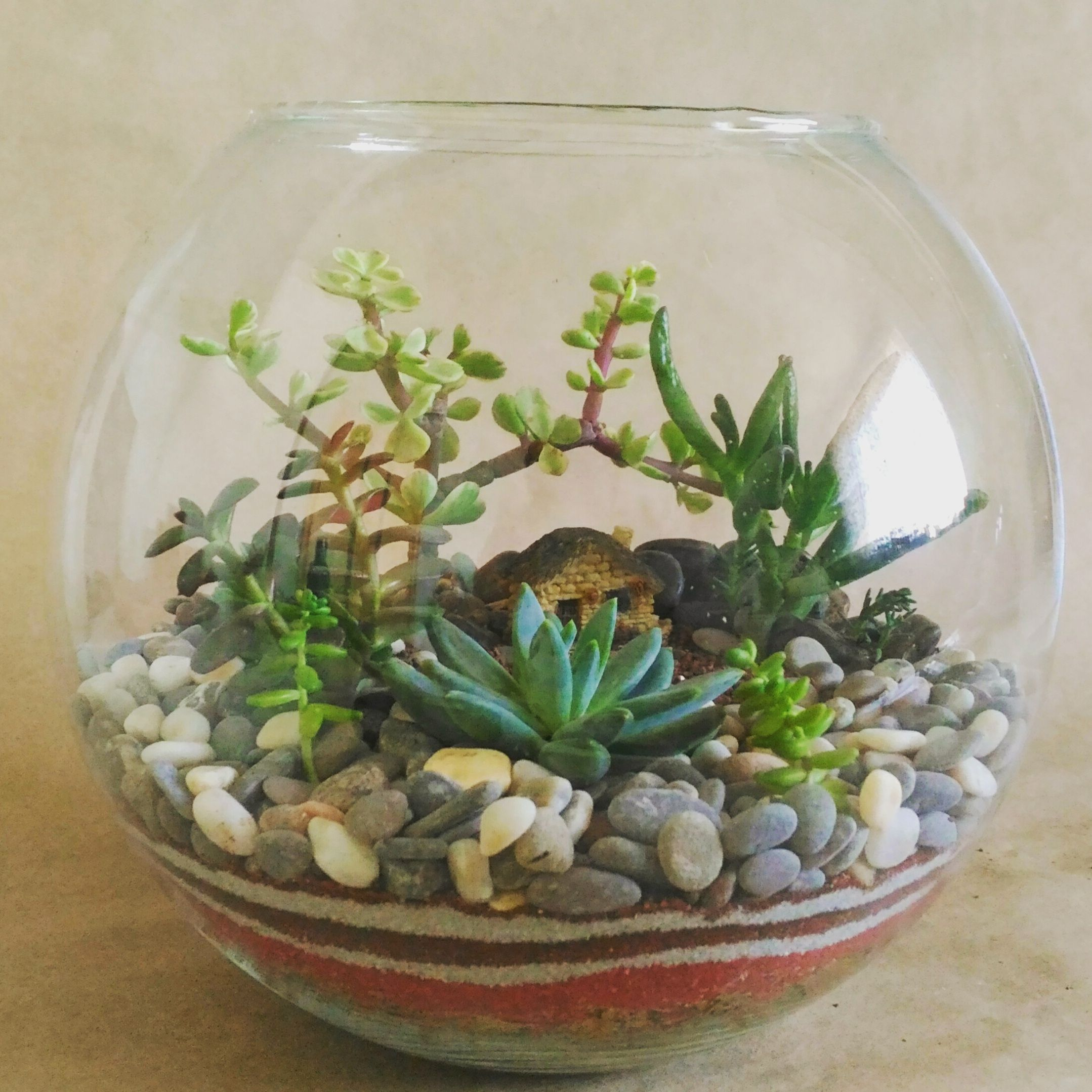 Pin de anastasiya kutukova en florarium pinterest for Peceras de jardin
