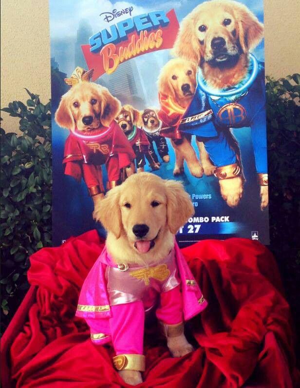 Super Buddies Air Buddies Movies Dog Costumes Air Bud Movies