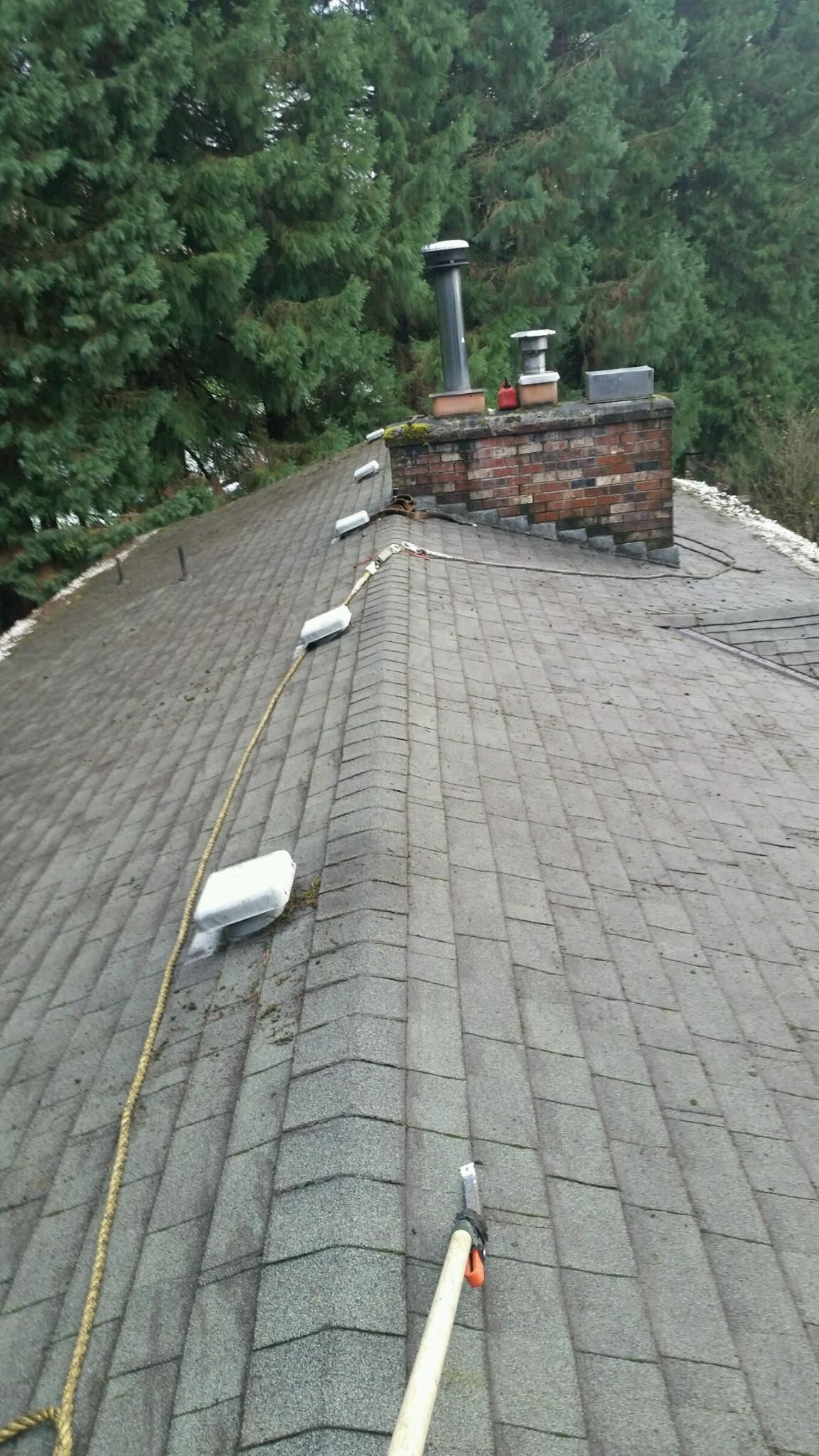 do you have moss growth on your roof receive professional roof