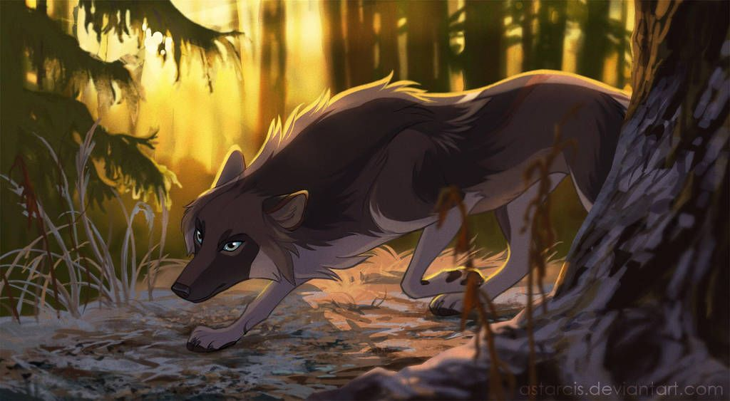 Photo of wolf's gift by azzai on DeviantArt