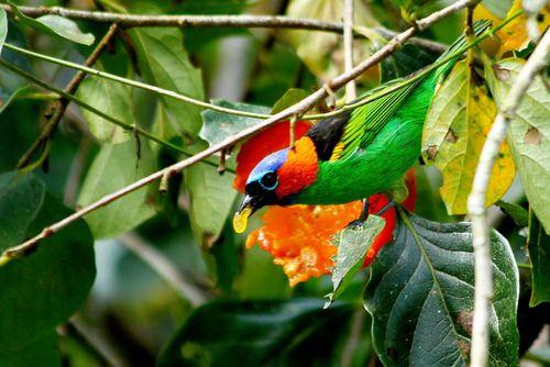 aves brasil