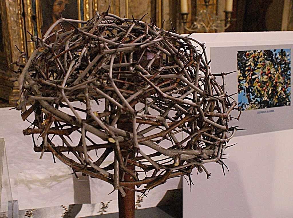 Através das atuais tecnologias 3D e holográficas, concluiu-se que a Coroa de Espinhos não foi uma simples tiara, mas um artefato que cobria a cabeça toda. O soldado que a urdiu deve ter usado seu próprio capacete como molde. Os grandes espinhos causaram mais de 70 perfurações na cabeça – a ideia já havia sido postulada por Fleury em 1870. A Coroa pode ter sido feita da planta Ziziphus spina-christi ou da Gundelia tournefortii (que só cresce no Oriente Médio).