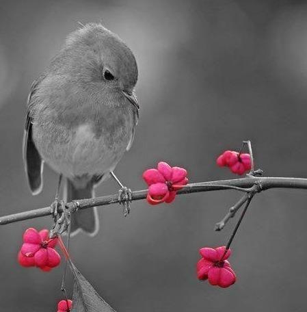 photo noir et blanc couleur-