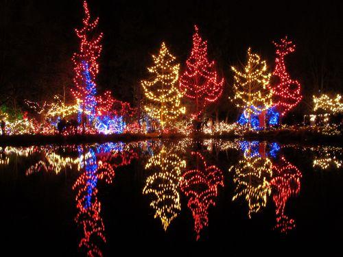 c5690a06a60f4c53c705a0b0038aa462 - Van Dusen Botanical Gardens Christmas Lights