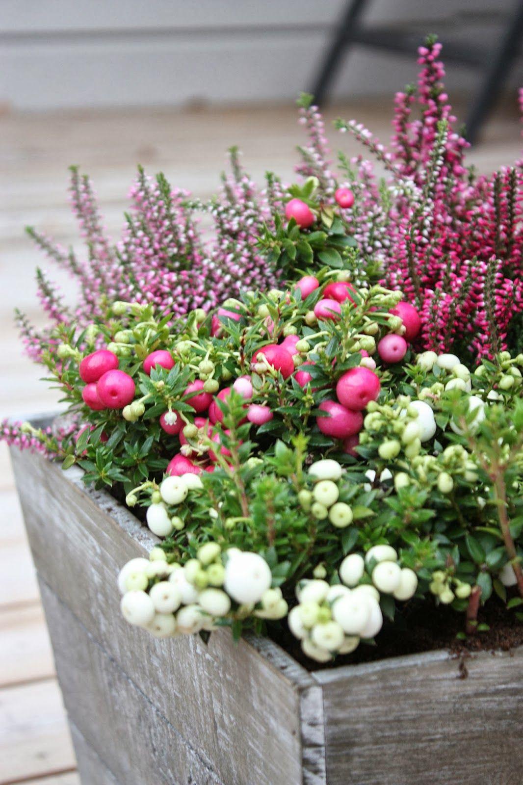38+ Plantes d hiver exterieur balcon trends